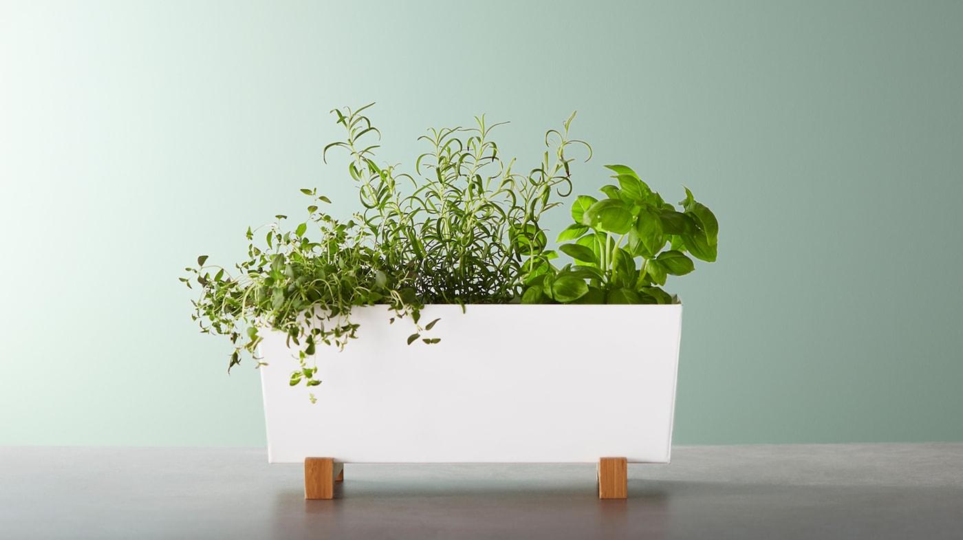 Praktiska krukor att ha inomhus eller i trädgården IKEA