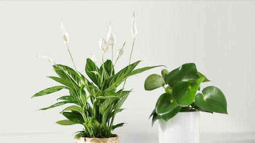 نباتات وزهور