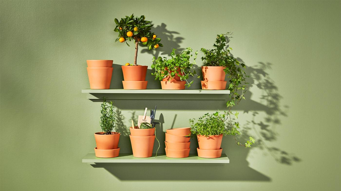 Кашпо и растения для сада