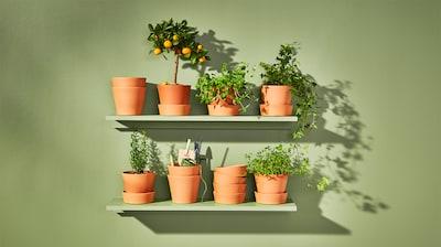 Садові горщики та рослини