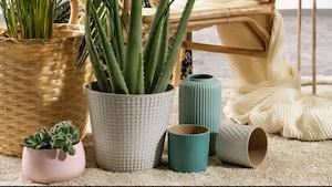 Biljke i tegle za biljke