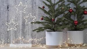 Christmas pots & plants